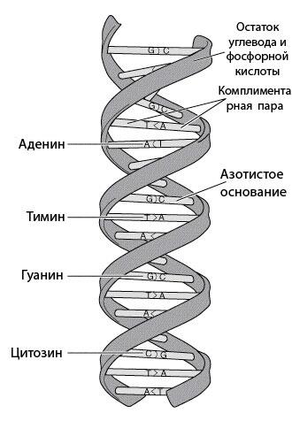 Именно на молекуле РНК в
